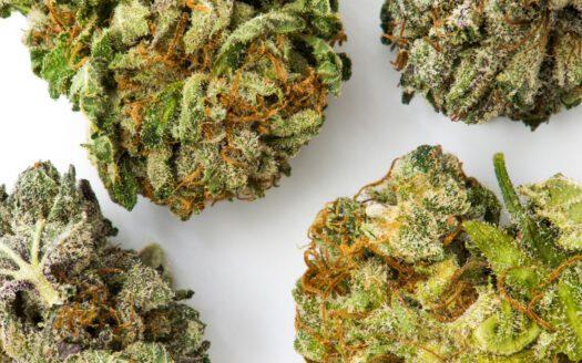 cannabis retail, $3.4 million revenue Cannabis Retail, $3.4 million revenue cannabis delivery for sale 525x328 cannabis businesses for sale - biz4less Cannabis Businesses for Sale – Biz4Less cannabis delivery for sale 525x328