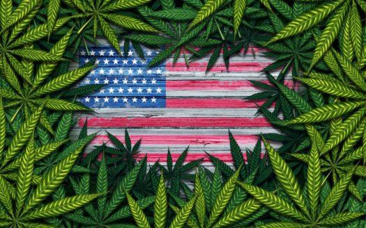 senators flooded with input on federal marijuana legalization bill Senators Flooded With Input On Federal Marijuana Legalization Bill cannabis legal bill 525x328 cannabis businesses for sale - biz4less Cannabis Businesses for Sale – Biz4Less cannabis legal bill 525x328